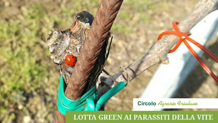 """Lotta """"green"""" ai parassiti della vite"""